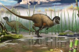 dinos had feathers